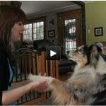 Miniature vidéo les animaux domestiques et la grossesse