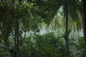 Photo : Virus Zika et la grossesse - forêt tropicale