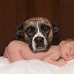 Photo - Gestion animale et arrivée de bébé - 36 semaines de grossesse - journal intime de Chantal